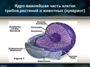 Ядро-важнейшая часть клетки грибов,растений и животных (эукариот)