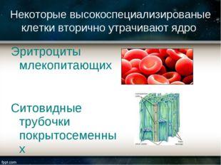 Эритроциты млекопитающих Ситовидные трубочки покрытосеменных Некоторые высоко