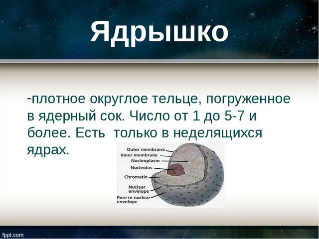 Ядрышко плотное округлое тельце, погруженное в ядерный сок. Число от 1 до 5-7...