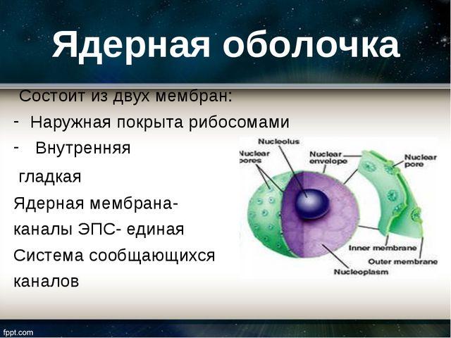 Ядерная оболочка Состоит из двух мембран: Наружная покрыта рибосомами Внутрен...