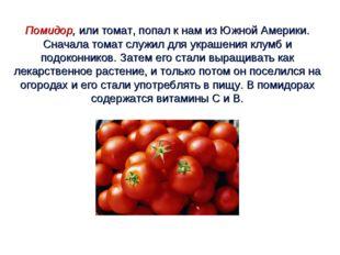 Помидор, или томат, попал к нам из Южной Америки. Сначала томат служил для ук