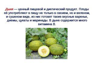 Дыня — ценный пищевой и диетический продукт. Плоды её употребляют в пищу не т