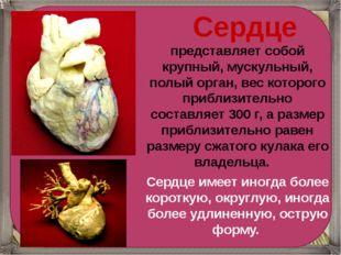 Сердце представляет собой крупный, мускульный, полый орган, вес которого