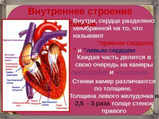 Внутреннее строение сердца Внутри, сердце разделено мембранной на то, что н