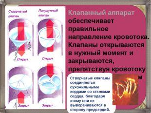 Клапанный аппарат обеспечивает правильное направление кровотока. Клапаны отк