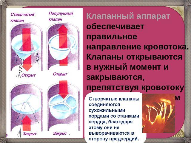 Клапанный аппарат обеспечивает правильное направление кровотока. Клапаны отк...