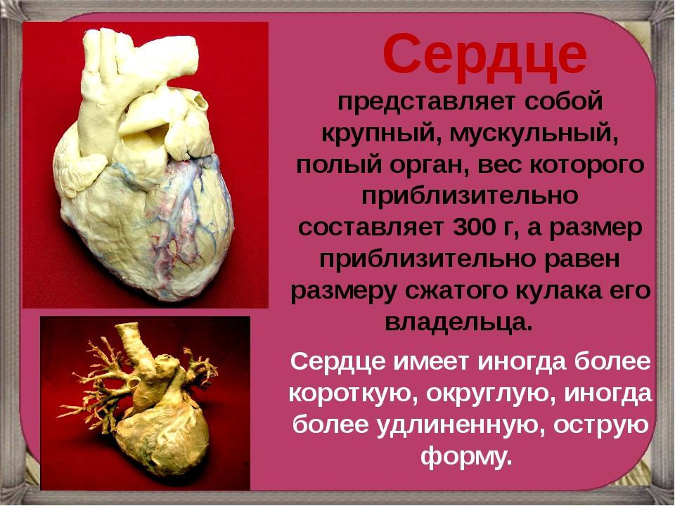 Сердце представляет собой крупный, мускульный, полый орган, вес которого...