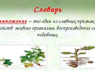 Словарь Размножение – это один из главных признаков и свойств живого организм