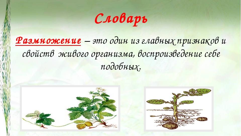 Словарь Размножение – это один из главных признаков и свойств живого организм...
