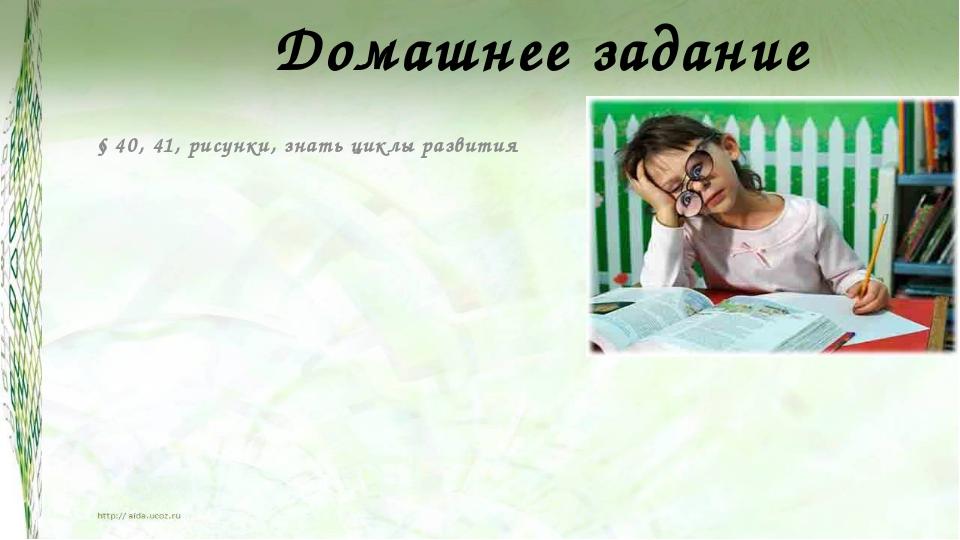 Домашнее задание § 40, 41, рисунки, знать циклы развития