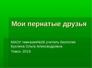 Мои пернатые друзья МАОУ гимназия№26 учитель биологии Бухлина Ольга Александр