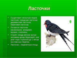 Ласточки Существует несколько видов ласточек: городская ласточка; деревенская