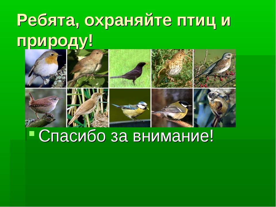 Ребята, охраняйте птиц и природу! Спасибо за внимание!