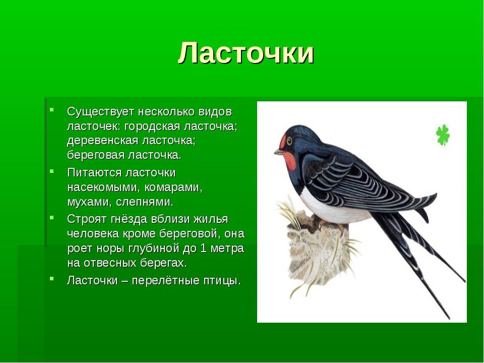 Ласточки Существует несколько видов ласточек: городская ласточка; деревенская...