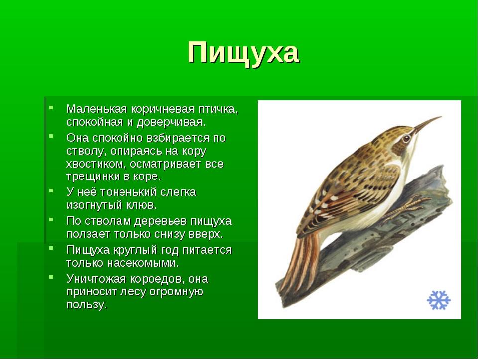 Пищуха Маленькая коричневая птичка, спокойная и доверчивая. Она спокойно взби...