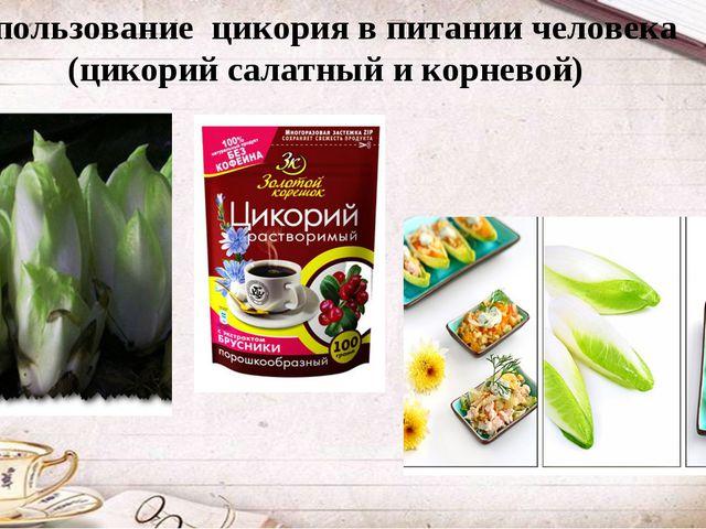 Использование цикория в питании человека (цикорий салатный и корневой)