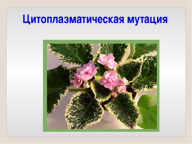 Цитоплазматическая мутация