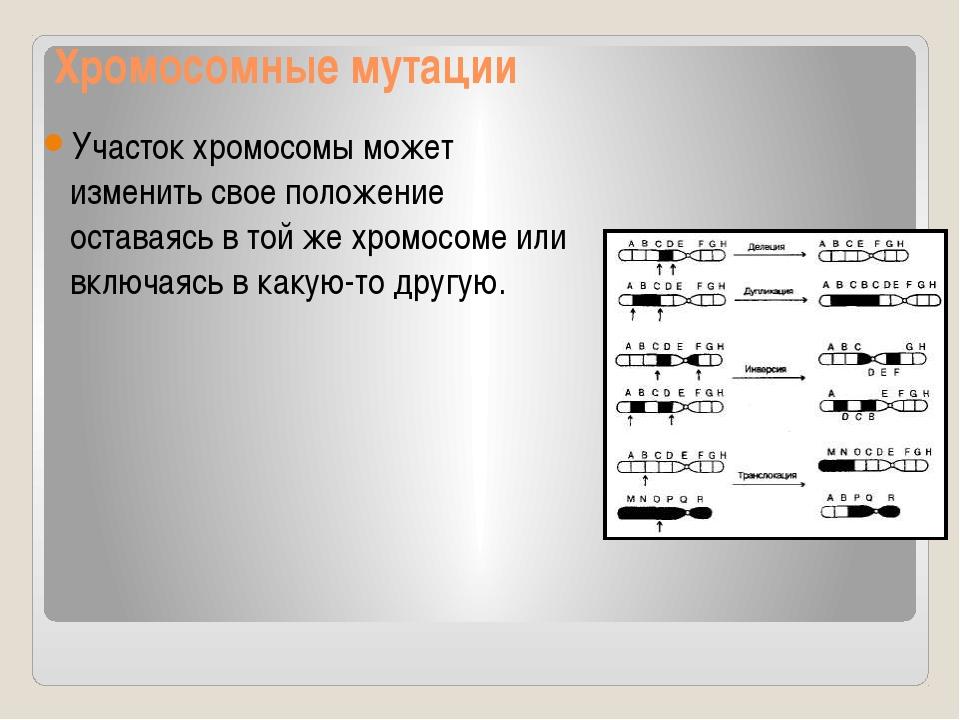 Хромосомные мутации Участок хромосомы может изменить свое положение оставаясь...