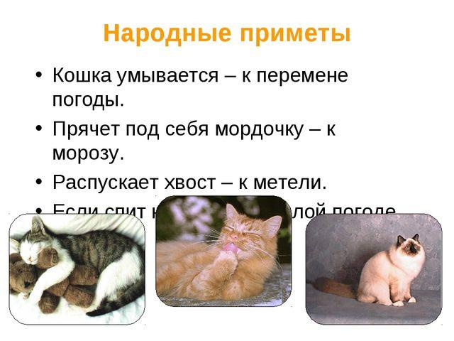 Народные приметы Кошка умывается – к перемене погоды. Прячет под себя мордочк...