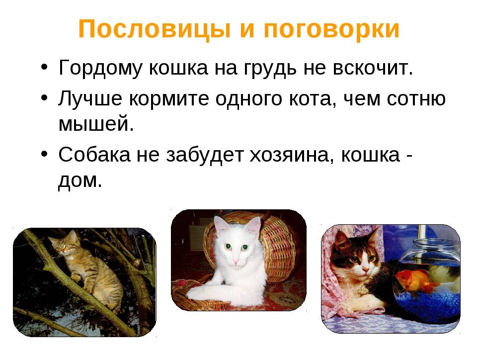 Пословицы и поговорки Гордому кошка на грудь не вскочит. Лучше кормите одного...