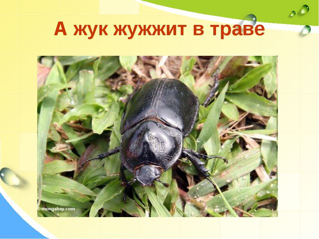 А жук жужжит в траве