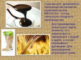 Сырьем для дрожжевого производства является кормовая патока МЕЛАССА – отход с