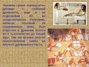 Человек сумел «приручить» дрожжи с глубокой древности, еще и не подозревая об