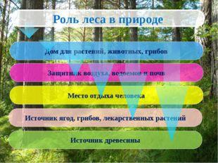 Источник ягод, грибов, лекарственных растений Место отдыха человека Роль леса