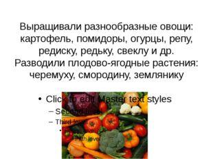 Выращивали разнообразные овощи: картофель, помидоры, огурцы, репу, редиску, р