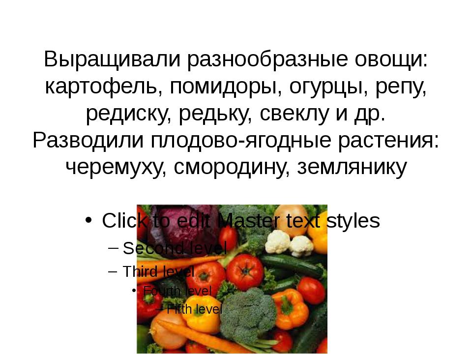 Выращивали разнообразные овощи: картофель, помидоры, огурцы, репу, редиску, р...