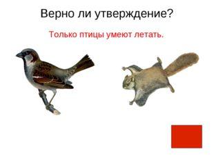 Верно ли утверждение? Только птицы умеют летать.