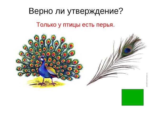 Верно ли утверждение? Только у птицы есть перья.