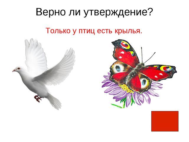 Верно ли утверждение? Только у птиц есть крылья.