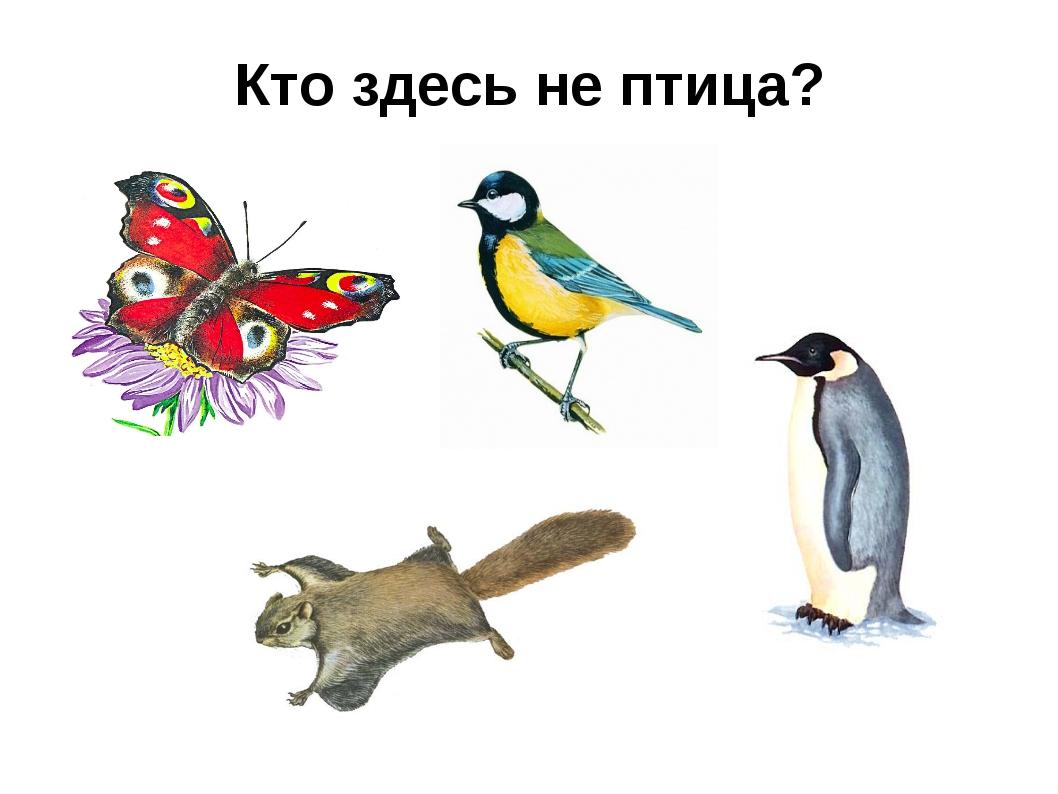 Кто здесь не птица?