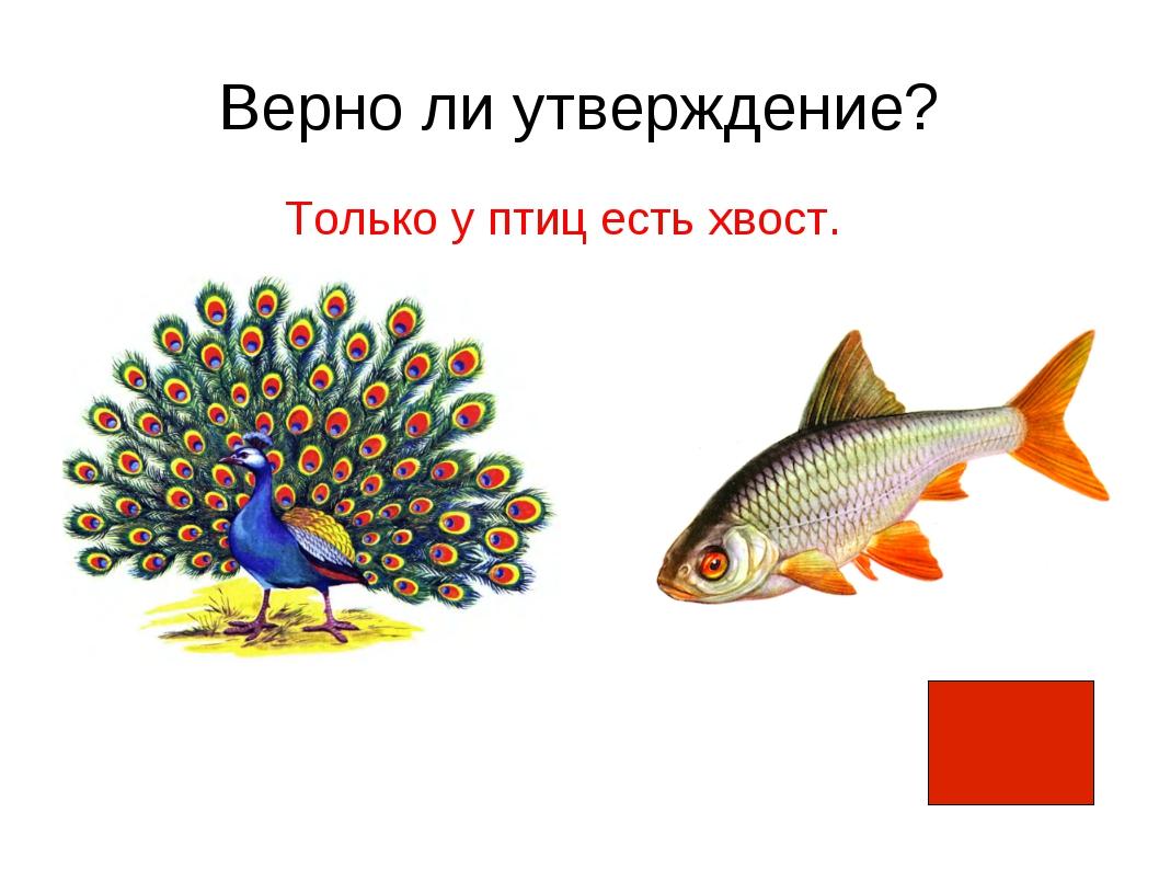 Верно ли утверждение? Только у птиц есть хвост.