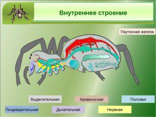 Какие глаза и какое зрение у речного рака? Глаза фасеточные, зрение мозаичное