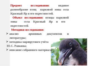 Предмет исследования: видовое разнообразие птиц парковой зоны села Красный Яр