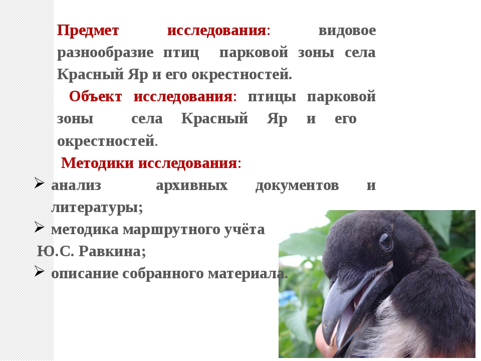 Предмет исследования: видовое разнообразие птиц парковой зоны села Красный Яр...