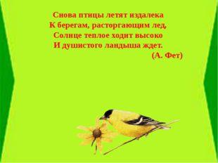 Снова птицы летят издалека К берегам, расторгающим лед, Солнце теплое ходит