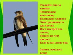 Угадайте, что за птичка- Тёмненькая невеличка, Беленькая с живота Хвост разд