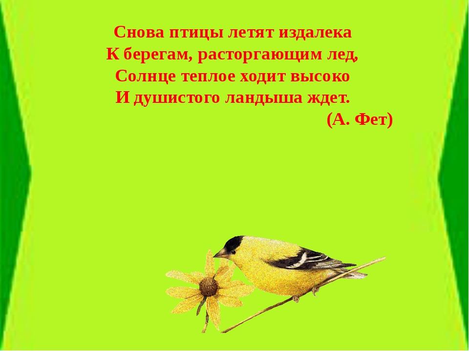 Снова птицы летят издалека К берегам, расторгающим лед, Солнце теплое ходит...