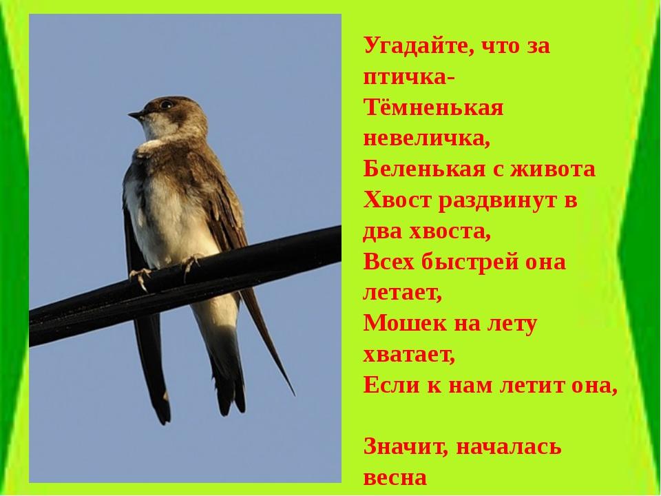 Угадайте, что за птичка- Тёмненькая невеличка, Беленькая с живота Хвост разд...