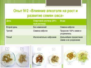 Опыт №2 «Влияние алкоголя на рост и развитие семян овса» ДеньСпиртовой раств