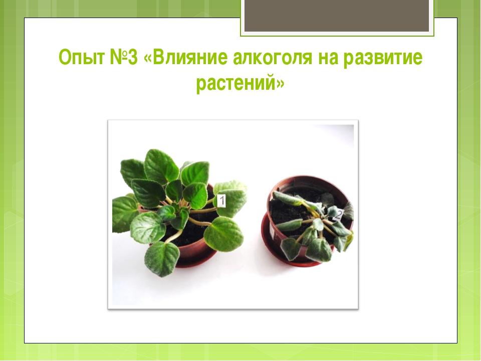Опыт №3 «Влияние алкоголя на развитие растений»