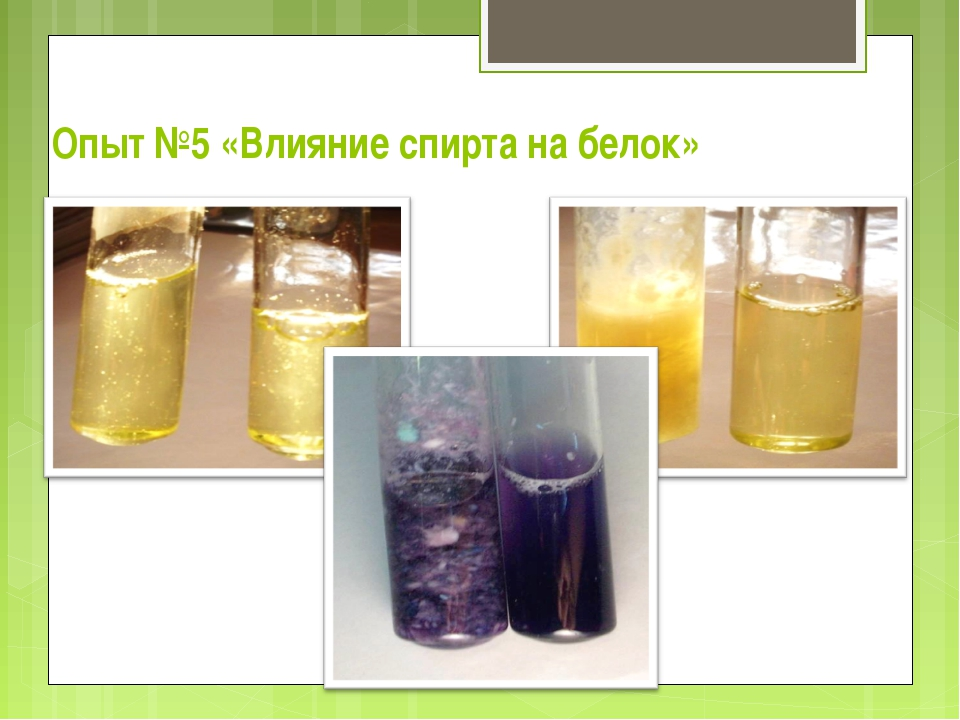 Опыт №5 «Влияние спирта на белок»