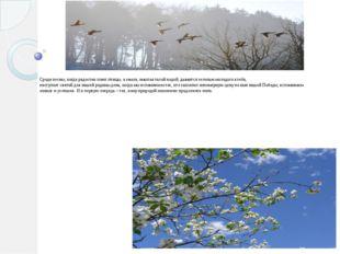 Среди весны, когда радостно поют птицы, а земля, омытая талой водой, дымится