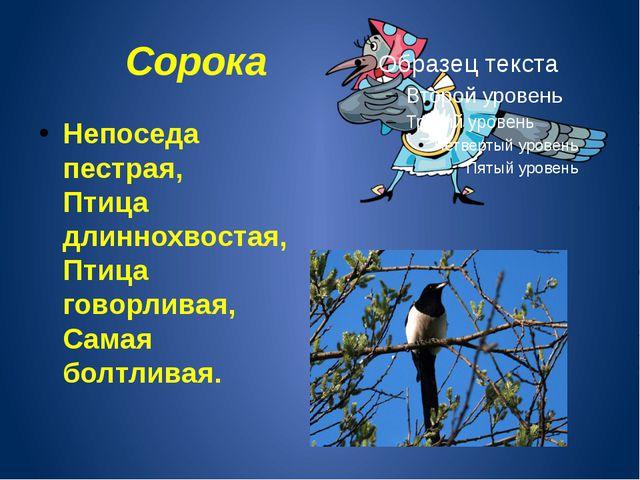 Сорока Непоседа пестрая, Птица длиннохвостая, Птица говорливая, Самая болтлив...