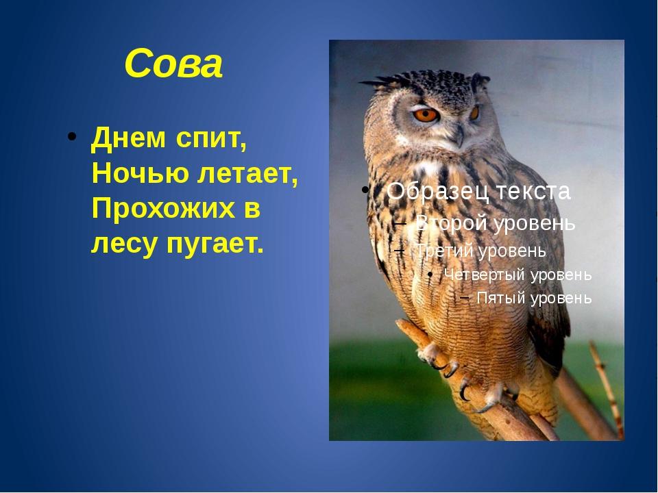 Сова Днем спит, Ночью летает, Прохожих в лесу пугает.