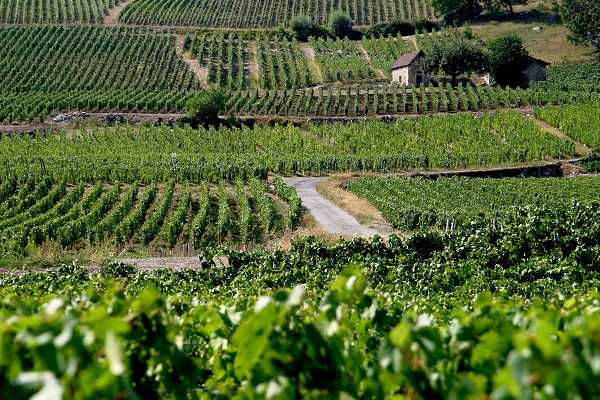rhone-valley[1]