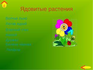 Ядовитые растения Волчье лыко Вороний глаз Лютик едкий Дурман Аконит Ландыш Б